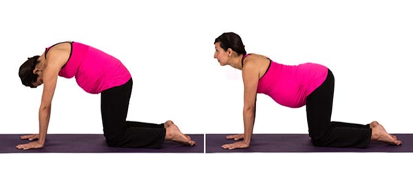 Jac-Prenatal-3-Cat-Cow-Pose-Marjaryasana-Bitilasana-from-Dolphin-Method.jpg