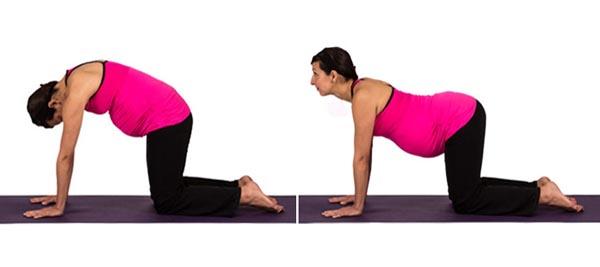 Jac-Prenatal-3-Cat-Cow-Pose-Marjaryasana-Bitilasana-from-Dolphin-Method.jpg